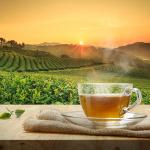 Groene thee, De EetLijn