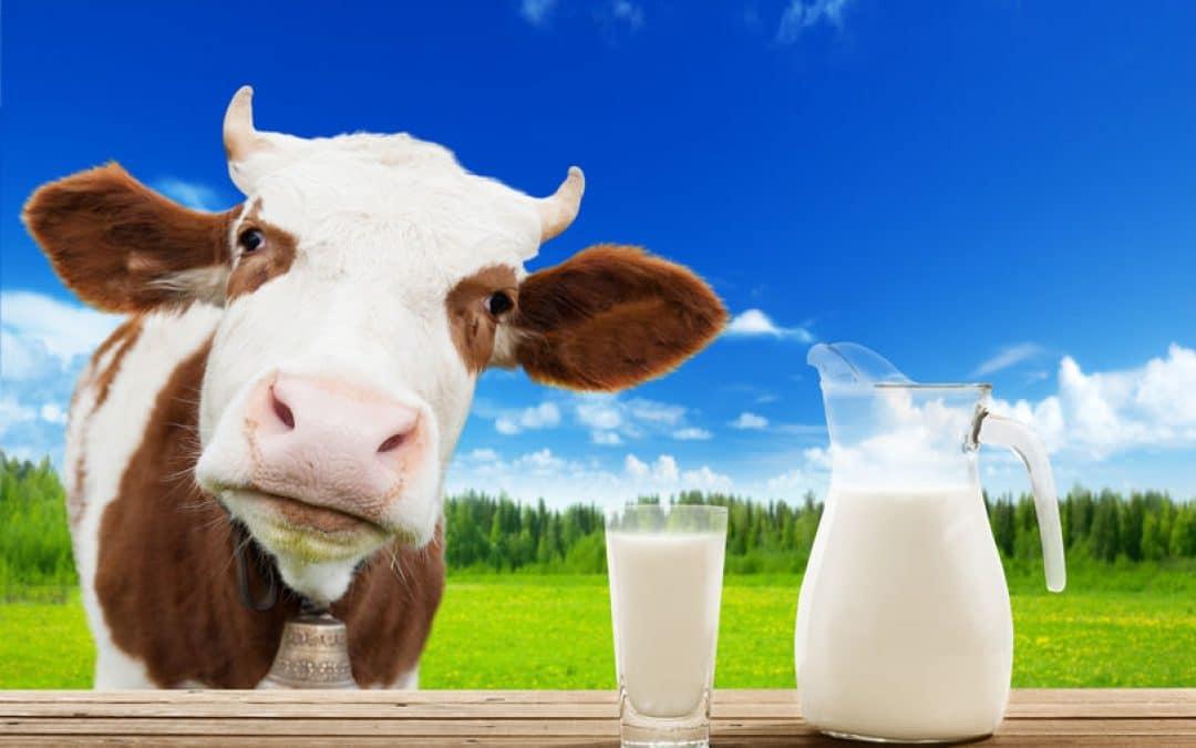 Melk, is het nu écht gezond of toch niet? En 8 redenen om minder melk te gebruiken
