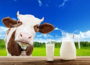 Melk van de koe De EetLijn